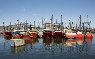 New Bedford Ocean Cluster að gera góða hluti