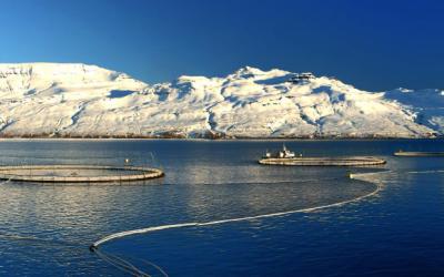 Framtíð fiskeldis á Íslandi